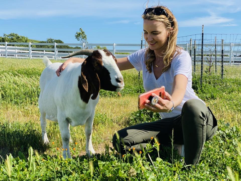 Virtual Visit to an Animal Sanctuary
